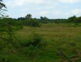 厦门鼓励多主体参与农村土地流转