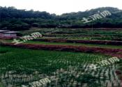 农业农村部长韩长赋:确定新时代农村土地制度改革方向!