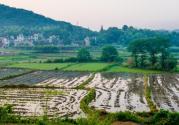 农村土地回收一亩30万是真的吗?回收土地有哪些要求?