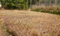 侵害土地承包經營權的損失怎么計算?