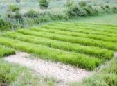 農村土地私人承包合同范本是怎樣的?