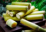 2019年種植甘蔗賺錢嗎?