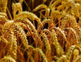 农业农村部:力争全年农业生产开门红