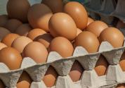 现货市场稳中走弱,鸡蛋期货继续弱势调整概率大