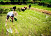国家新政策:2019年农民有3大出路,个个都比打工赚钱!