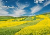 绿色产业六大类范畴敲定