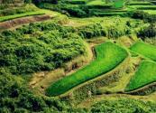 2019年农村土地法将大修,这一类土地价值提高!