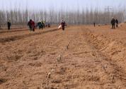 农民承包土地使用权可以转让吗?