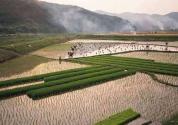 農田承包土地變更需要哪些條件?如何申報?