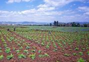 农民必看!农村自家的土地能流转给外村人吗?