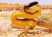 世界上十大最毒的动物介绍!