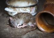 家里有老鼠怎么办?来这些动物是吉兆!
