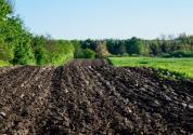 我国的耕地主要分布在哪里?人均多少?