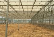 大棚防虫网作用大,如何选择和安装?
