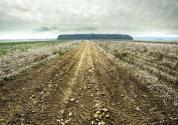 我国耕地面积逐年减少的原因分析!有什么?;ご胧??