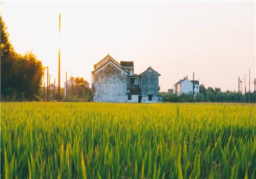 2019年农业补贴政策全面了解:这三大类不能错过!