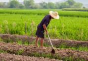 2019年重點強農惠農政策公布,快看看哪些補貼或獎勵與你有關?