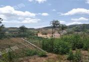 现在林地养殖申报条件、手续有哪些?