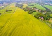 一公顷是多少平方米?土地面积单位怎么换算?