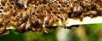 蜜蜂养殖成本计算