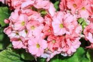 灌木花卉植物天?#27599;?#31181;子价格及种植方法介绍