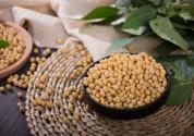 國產大豆今年種植面積增加1000萬畝