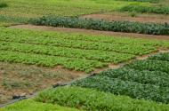 農村土地確權有什么意義?