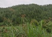 韶關市新豐縣8880畝經濟林項目尋求招商合作
