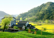 被征收的農村宅基地怎么補償?還可以申請新的宅基地嗎?