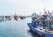 福建省大力發展遠洋漁業,綜合競爭力居全國前列!