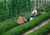 山西出台全国首个《农业生产托管服务规范》,将于8月25日实施!