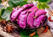 紫扁豆什么時候播種