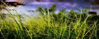 被認為我國現存最早總結江南水稻地區栽培技術的一部農書是?