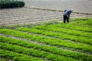 全國有5.39億畝耕地在流轉