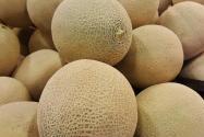 哈密瓜是哪里的特產?買的是生的怎么辦?