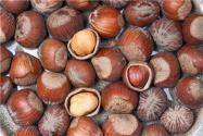 2019年榛子多少錢一斤?榛子苗的價格是多少?功效和作用有哪些?