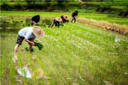 2020年農業重點補貼對象是哪些人群?這五種人或將拿不到補貼!