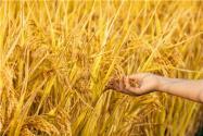 2020年糧補政策是什么?還會有嗎?有的話什么時候發放?