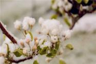 暖冬過后,果樹倒春寒的預防和補救措施有哪些?建議果農收藏!