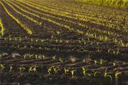 《东北黑土地保护性耕作行动计划(2020—2025年)》出台背景及主要内容