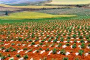 集體土地使用證新政策有哪些?怎么辦理?