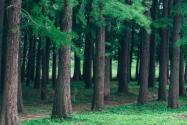 森林火災絕大多數是人為原因引發是怎么回事?有什么后果?等級是怎么劃分的?