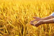 2020年農民貸款需要什么條件?能貸多少錢?