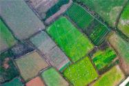 未來農業種植怎么發展?將迎來這五個發展新趨勢!