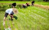2020-2022年農業生產發展趨勢有哪些?這四種模式趨不可擋!
