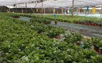 四川成都郫都區8.3畝高標準恒溫花卉大棚轉讓