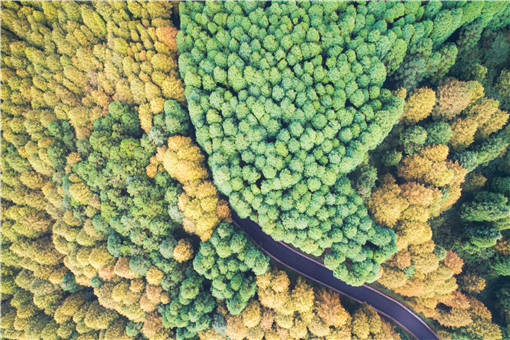 種子園是什么?管理技術有哪些內容?它和母樹林的區別是什么?