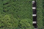 貴陽高校爬山虎占領9層圖書館具體是怎么回事?爬山虎具有哪些作用?附詳情!
