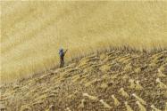 農民貸款需要什么條件?一無所有怎么貸款10萬?
