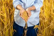 2020農民無息貸款需要什么條件?最高能貸多少?